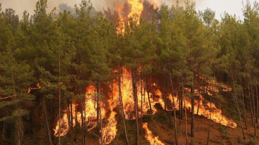 Karabük'te 45 hektar alan yandı