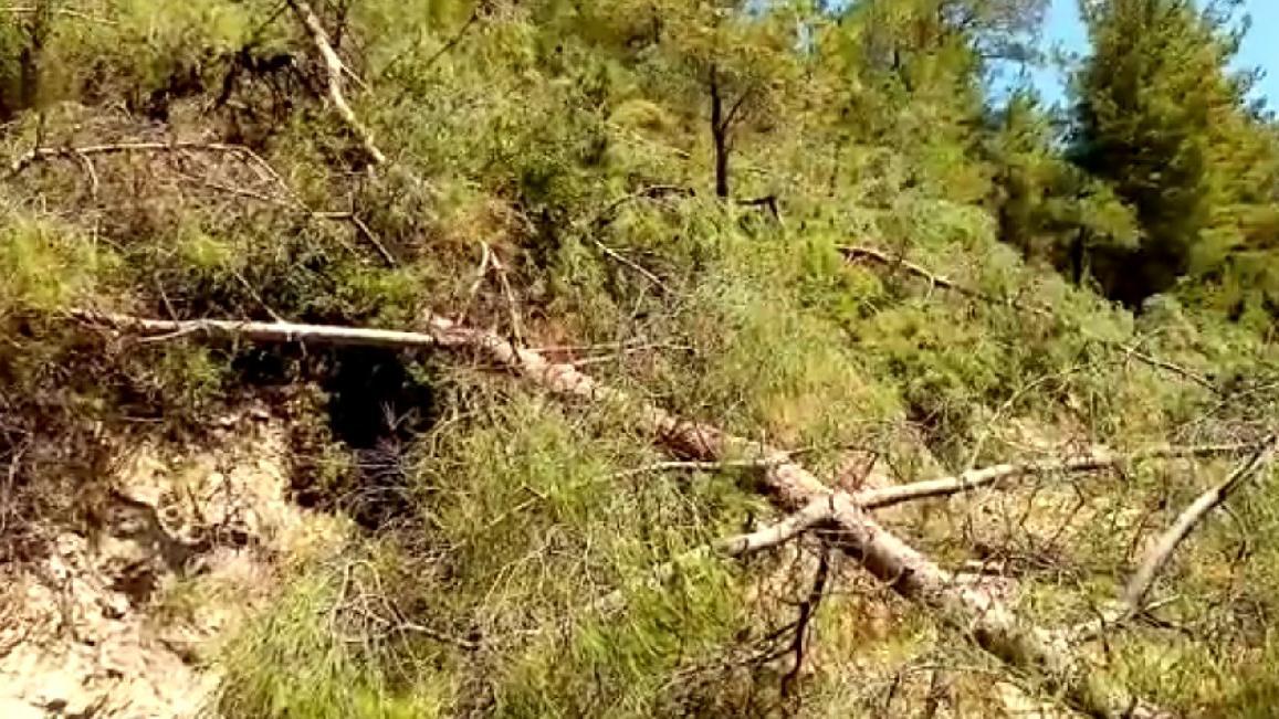 Yangını fırsat bilip Akbelen ormanlarına girdiler! İşçilere ağaç kestirttiler