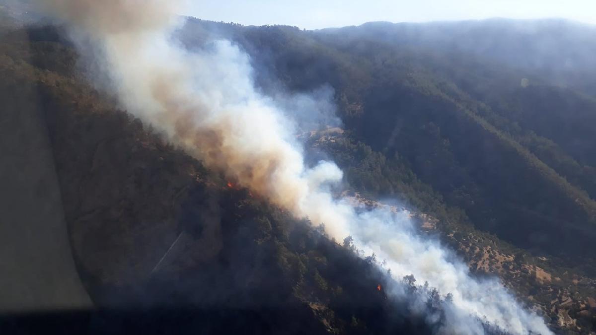 Aydın'da bir orman yangını daha
