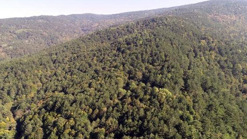 Orman Genel Müdürlüğü'nden Ormanspor ve iz ödenek açıklaması