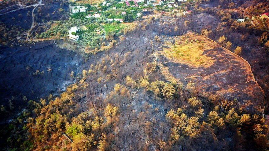Milas'ta 8 bin 480 hektar ormanlık alan kül oldu
