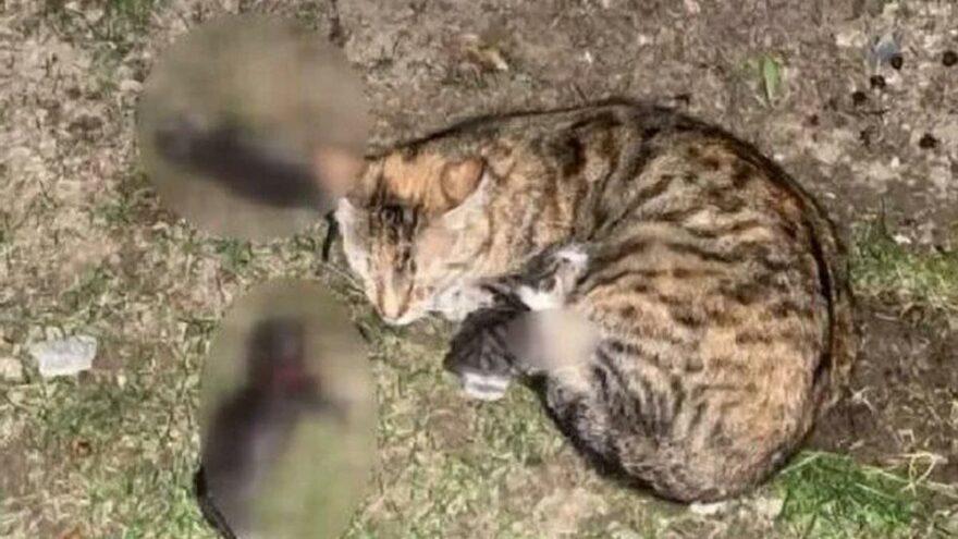 Yavru kedileri kürekle katletmişti, istenen ceza belli oldu