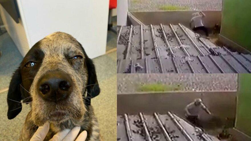 Gözü dönen saldırgan köpeği sopa ile dövdü