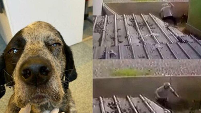 Köpeği öldüresiye döven şüpheli adli kontrolle serbest