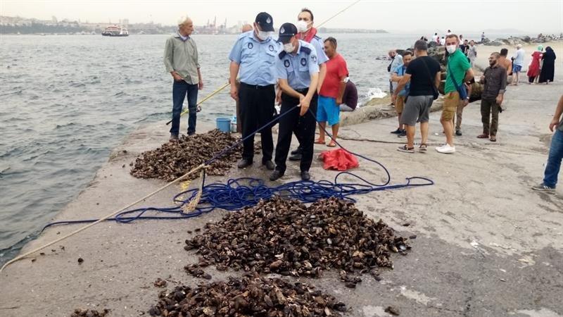 Kaçak avlanan yarım ton midye denize bırakıldı