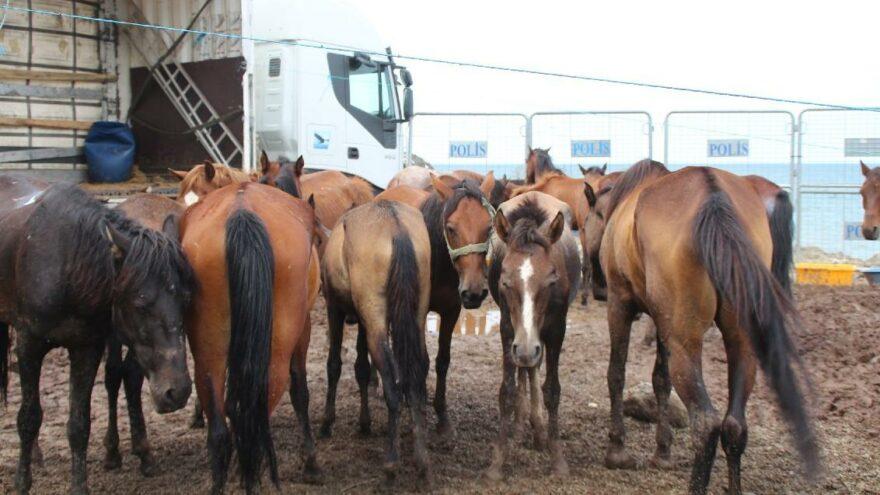 Ölüme terk edilen atların sahibine 35 bin 700 lira ceza