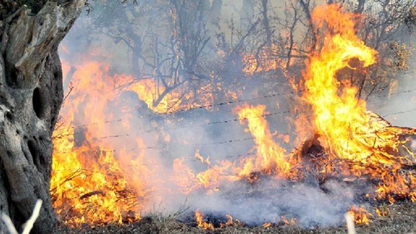 Milas'ta zeytin tarlalarındaki yangın ahırlara sıçradı
