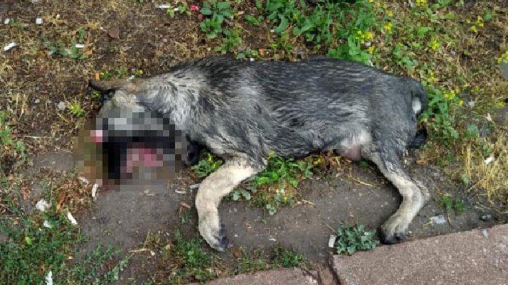 Parkta, gözleri oyulmuş ölü köpek bulundu