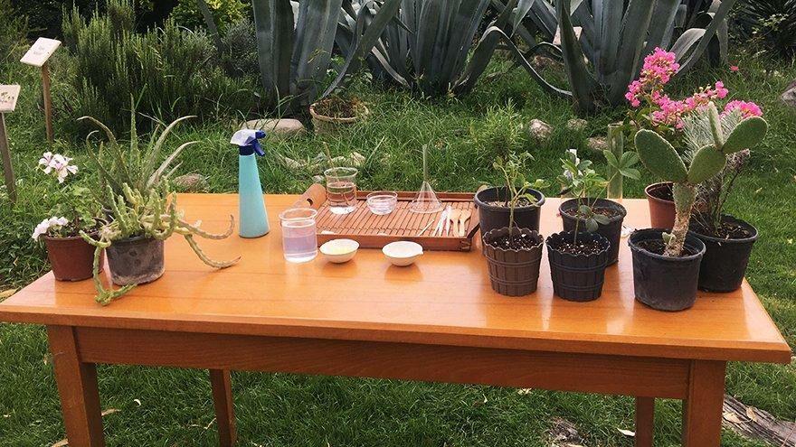 Corona balkon bahçeciliğine ilgiyi artırdı