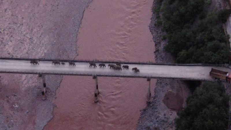 Filler kaçtı, 150 binden fazla kişi tahliye edildi