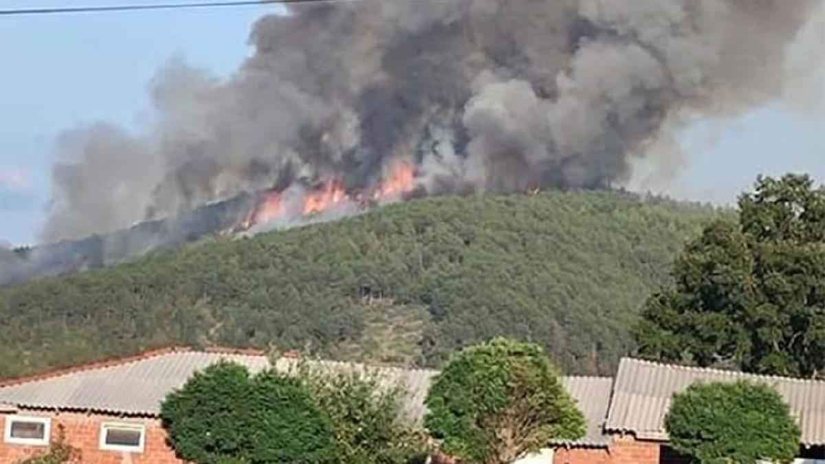 Harmancık'ta orman yangını