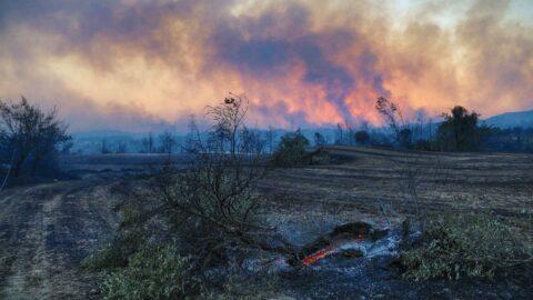 İklim krizinin yıkıcı etkisi... Yangında yok olan alan 13 yıllık ortalamanın üzerinde