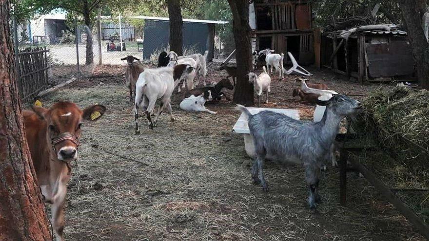 Marmaris'teki orman yangınında 347 hayvan kurtarıldı