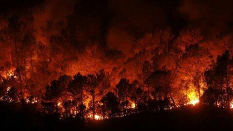 İspanya'da yüksek sıcaklıklar nedeniyle 'yangın' alarmı verildi