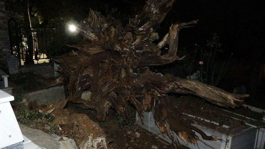 Tarihi çınar ağacı mezarların üzerine devrildi