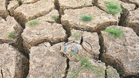 Kuraklıktan sonra çiftçiyi alacaklılar yakıyor