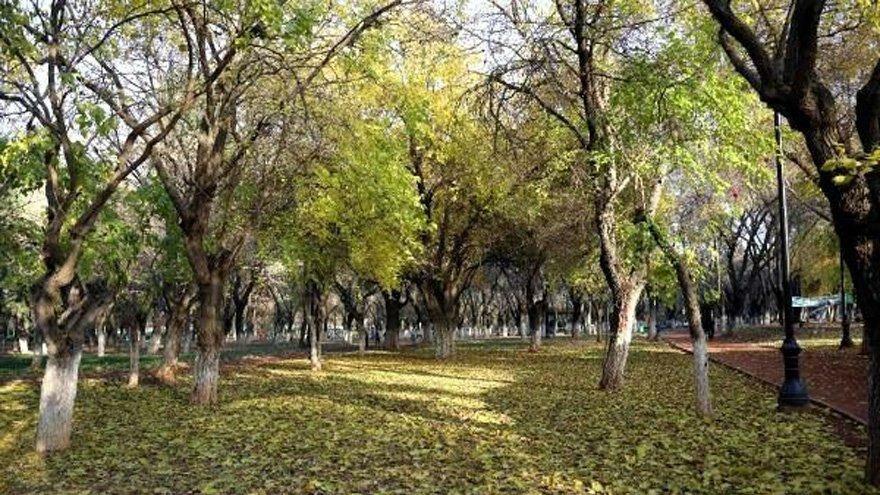 Atatürk'ün fidanına 1 altın ödendi, yanan ormanlar yeniden yeşertildi
