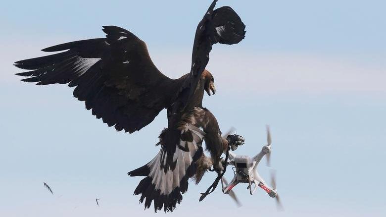 """Fransa'da drone krizi: """"Doğal yaşamı korkutmayı bırakın"""""""
