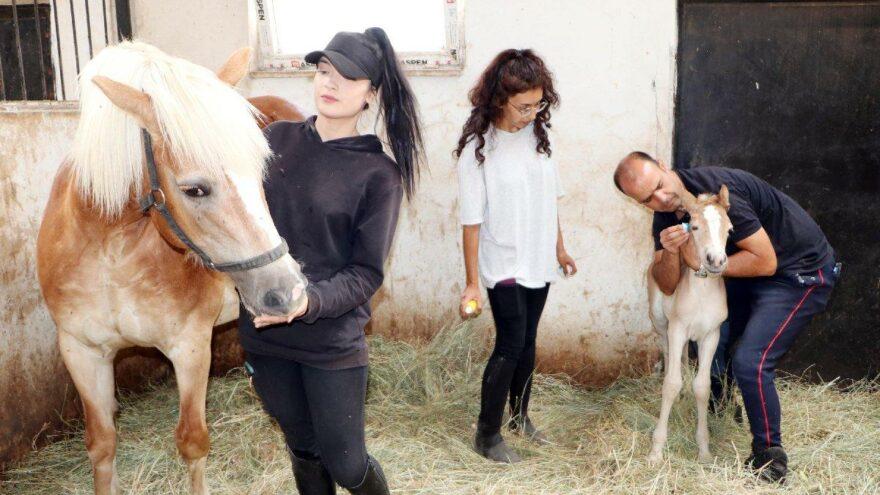 Staj gördükleri at doğum yaptı