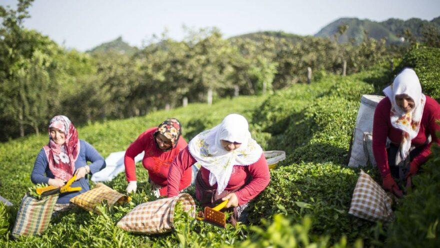 TZOB Başkanı Bayraktar: Özel sektörün çay alım fiyatları 2 buçuk liraya geriledi