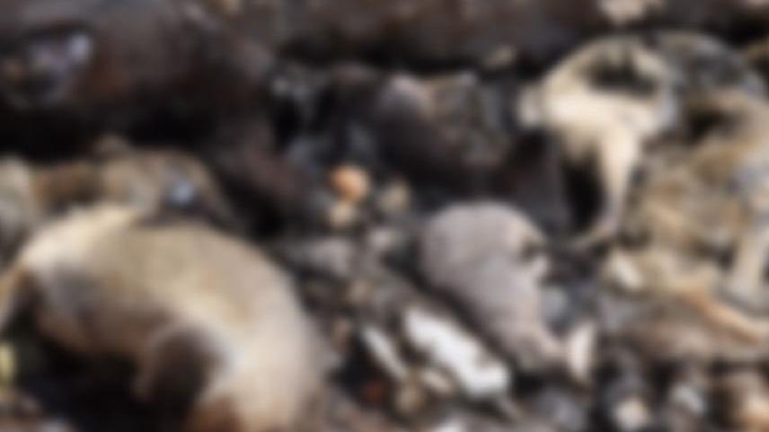 Toplu hayvan mezarı için yetkili isimden açıklama geldi