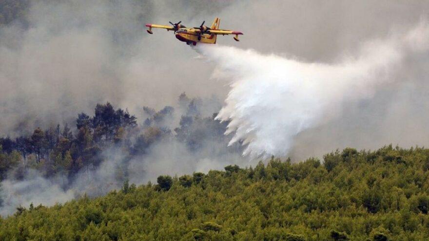 İki haftada 13 orman yangını çıkaran 14 yaşındaki çocuk tutuklandı
