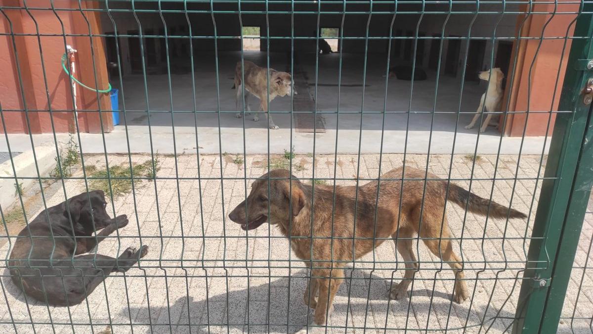 İBB'nin hayvan barınağında Tarım Müdürlüğü inceleme yaptı