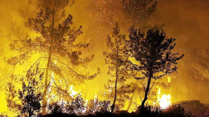 Fidan dikmek doğru değil, yanan ormanlar kendi küllerinden yeniden yeşerecek
