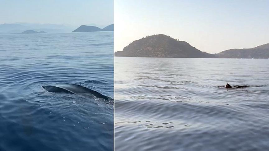 'Kafası 10 kiloluk karpuz gibiydi' Türkiye kıyılarındaki ilk defa canlı görüntülendi