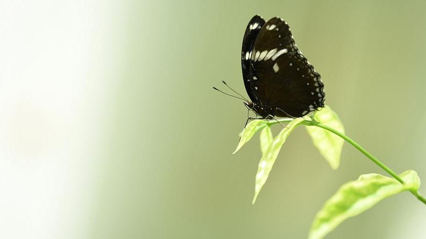 Kelebekler bahçesi