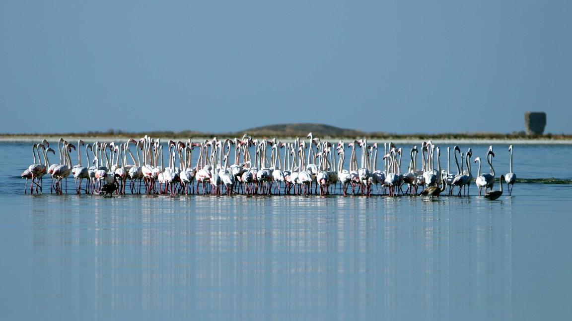 Flamingolar kuraklık nedeniyle yer değiştirdi