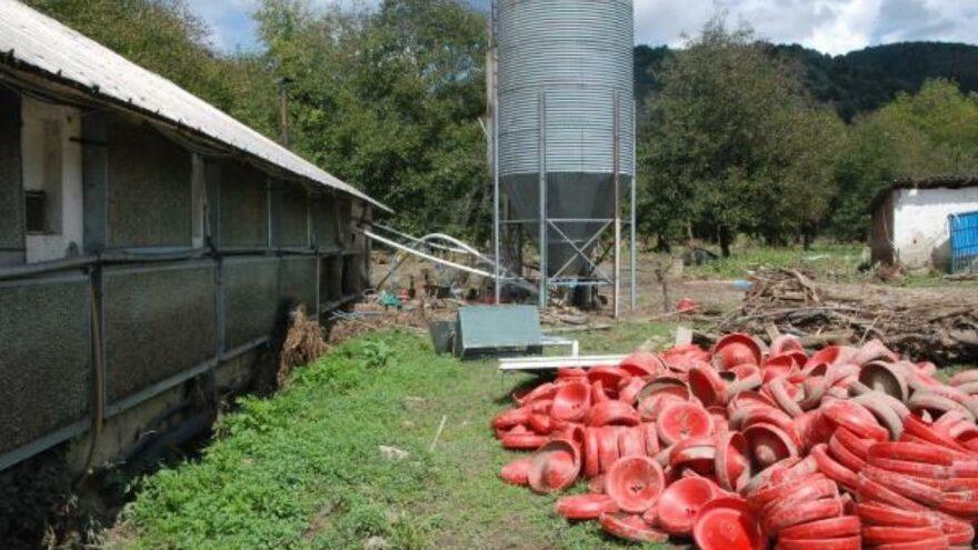 Bartın'da selde 24 bin tavuk öldü