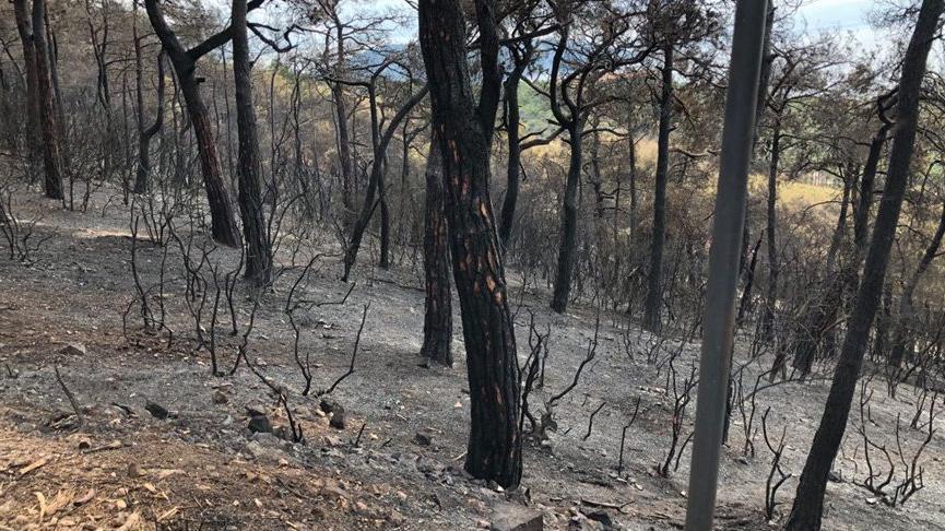Heybeliada sakinleri: Yangın çok kısa sürede her tarafı sardı