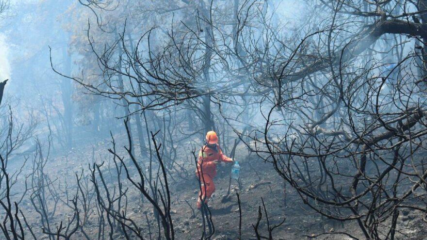 Heybeliada'daki yangında 6.9 hektarlık orman zarar gördü