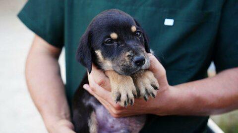 Selden kurtarılan köpeğin ismi 'Mucize' oldu