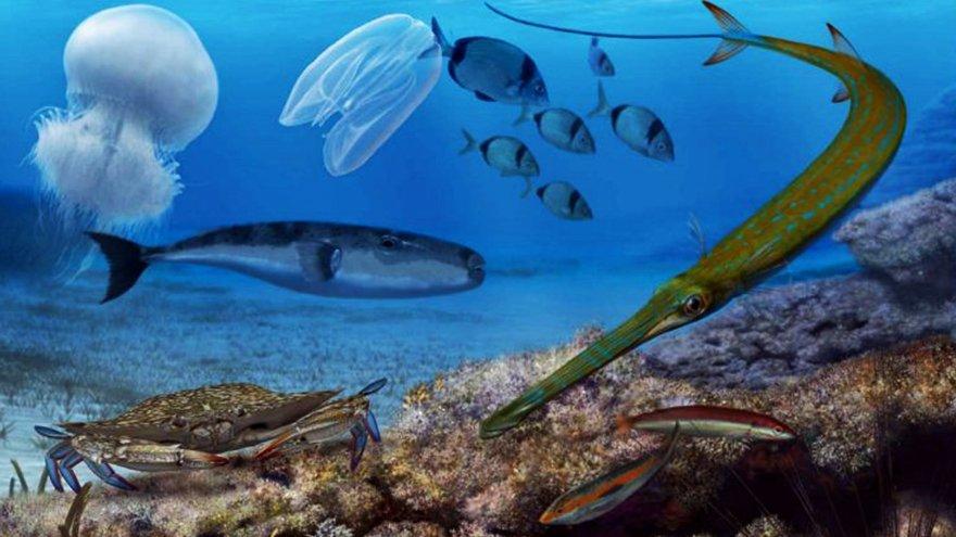 Uzman isim uyardı: Denizlerimizde biyo-güvenlik sorunu var