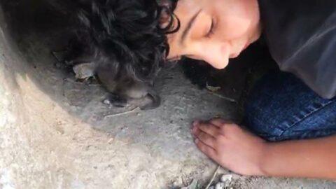 Sürünerek girdiği kayanın altından dört can kurtardı