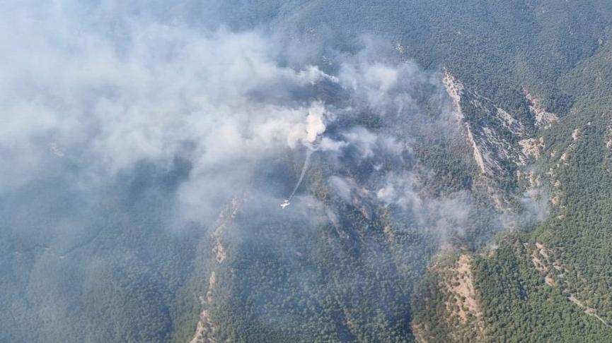 Kazdağı Milli Parkı'ndaki yangını söndürmeye çalışan bir kişiye ayı saldırısı