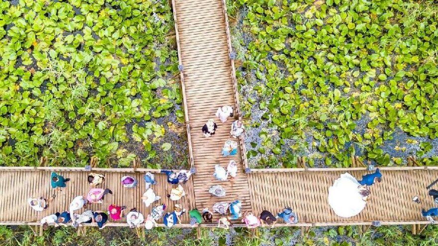 Kuş cenneti Efteni Gölü ziyaretçi akını