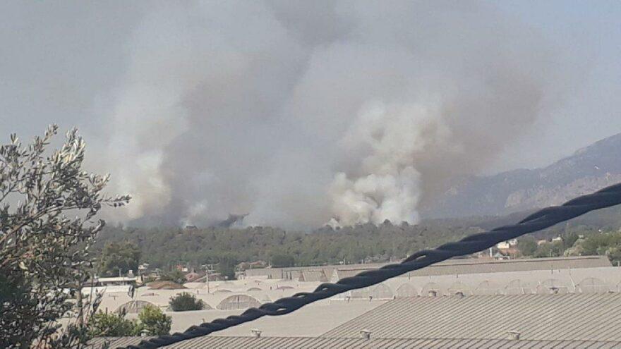 Muğla Seydikemer'de orman yangını