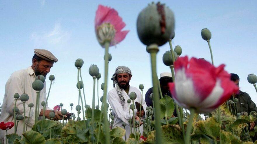 Afganistan'dan kaçan Merkez Bankası Başkanı: Cari açığın bir kısmı afyon geliriyle kapatılıyordu