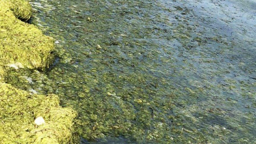 Beyşehir Gölü'nün rengi yeşile döndü