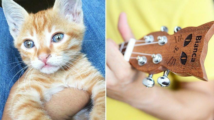 Kaybolan kedisinin anısına özel ukulele üretti