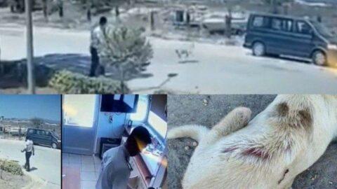 Adana'da vicdanları sızlatan görüntü: Kaynar suyu köpeğin üzerine döktü