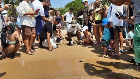 Didimli caretta yavruları denizle buluştu