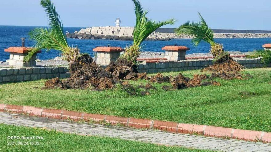 Sahil yolu için ağaçlar söküldü, vatandaş isyan etti