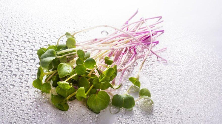 Mikro yeşillik nedir, evde mikro yeşillik nasıl yetiştirilir?