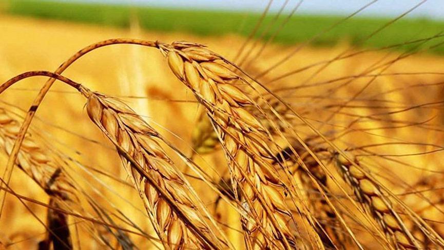 Arpa için çiftçiye 1.750 yabancıya 2.400 lira