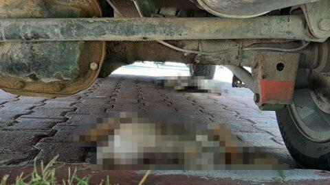 5 yavru köpek otoparkta ölü bulundu, hayvanseverler isyan etti