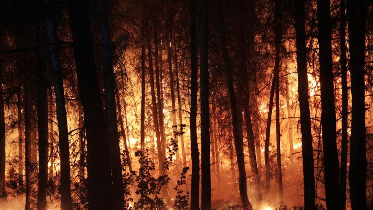 Orman yangınında tutuklama kararı